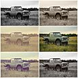 Bronco collage