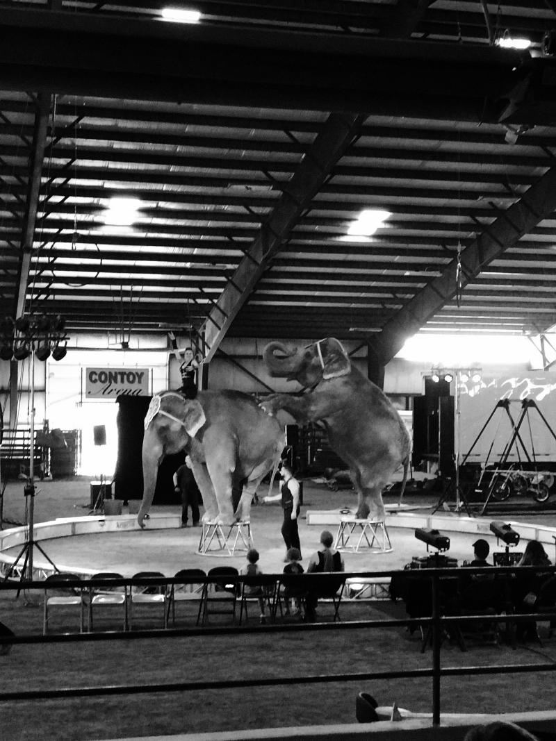 Circus_13