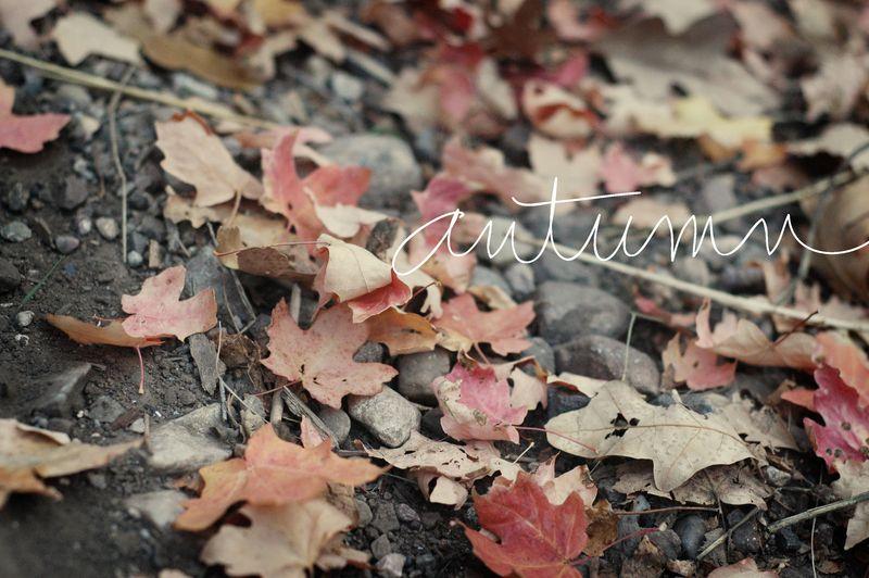 2431_autumn